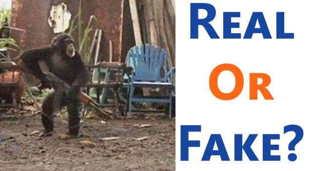 Real or Fake: When Chimps Attack