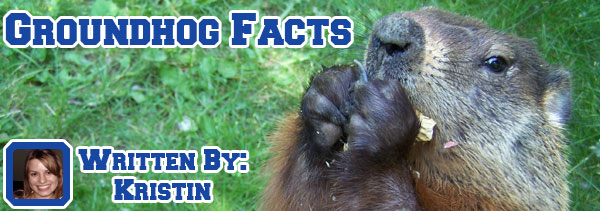 groundhog-facts