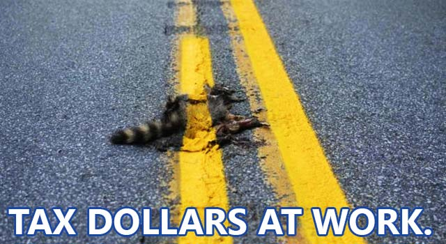 Road Crew Paints Over Dead Raccoon