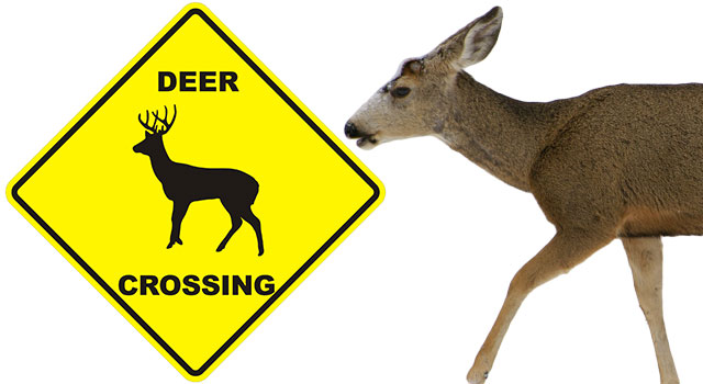A Humorous Lesson On Deer Crossing Signs
